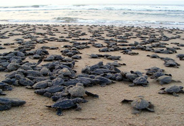 Gopalpur on Sea with Rydley Turtle Tours