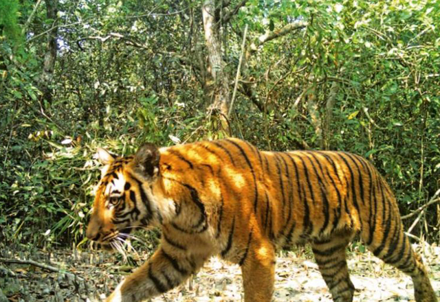 Odisha Wildlife Special Tours